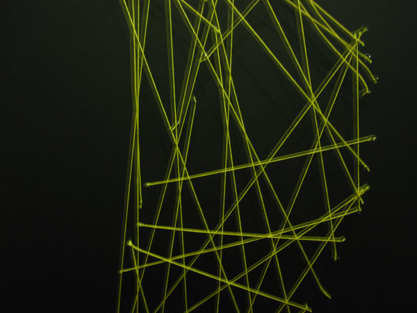 blog-string-neon-unfocused_600w450h.jpg