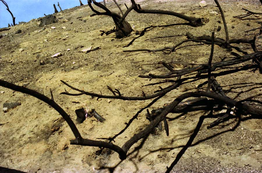 fire aftermath, Angeles Crest